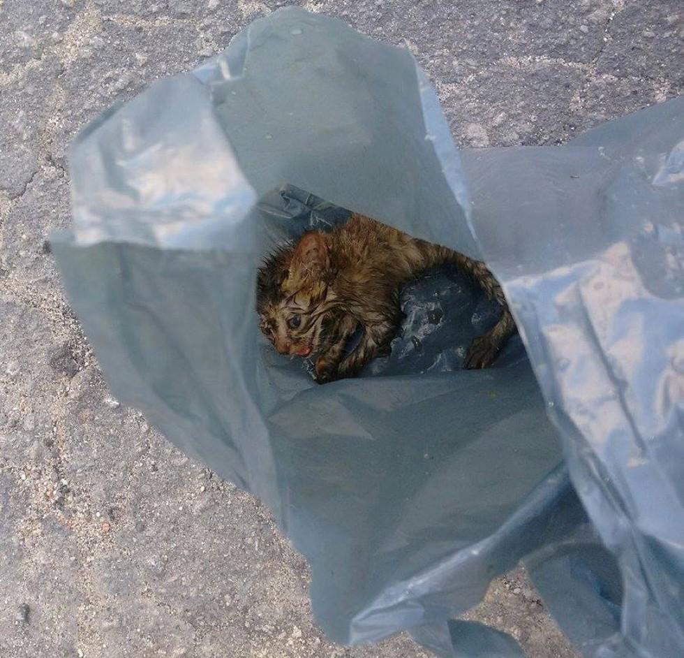 Напуганный, мокрый и очень жалкий – этот котёнок впервые увидел мир… из мусорного пакета!