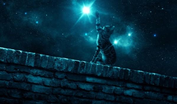 Восемь жизней кота Василия