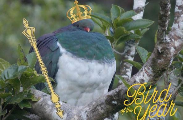 Пьяный голубь стал птицей го…