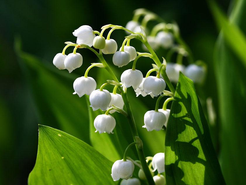 Опасные растения: 10 наихудших цветов для дачи