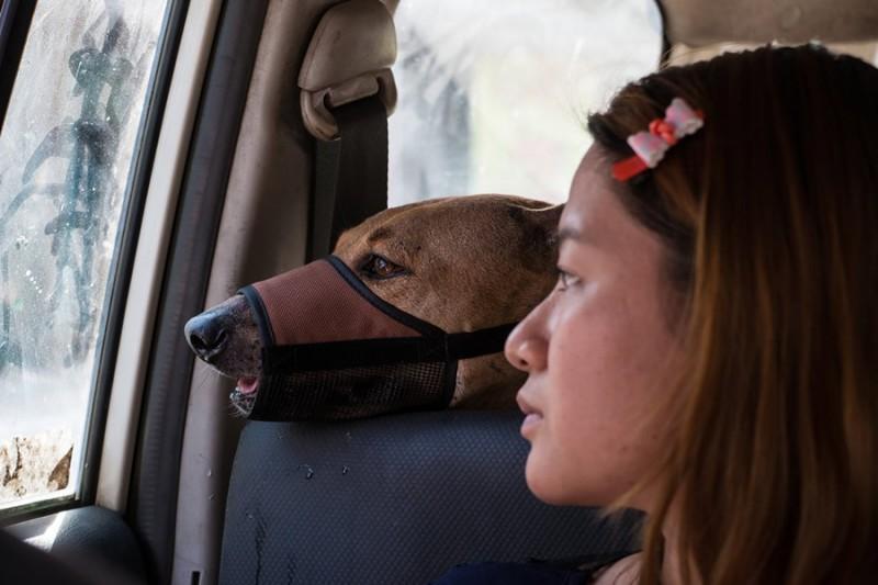 Трогательная история о девушке, которая спасает бездомных собак