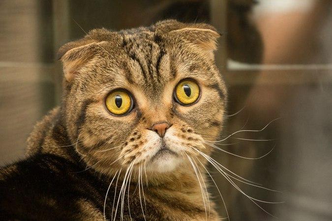 Почему в Москве хотят запретить кошек?