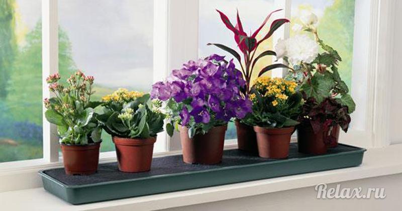 Какие цветы убрать с подоконника, чтобы наладить личную жизнь