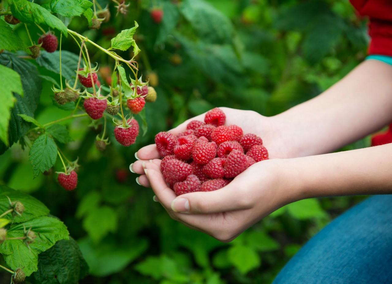 Июль – самое время заняться увеличением урожая следующего года