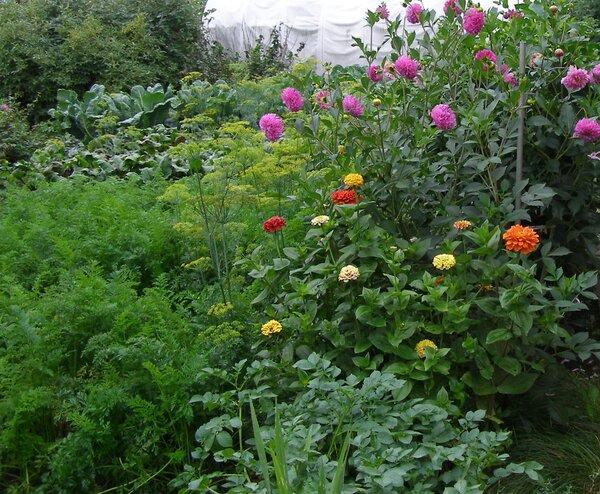 «Бизнес» в 70 лет на излишках своего огорода