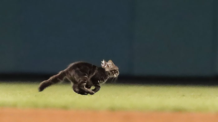 This Kitten Interrupted A Baseball Match In The Cutest Way, And Then Disappeared As Mysteriously As It Appeared