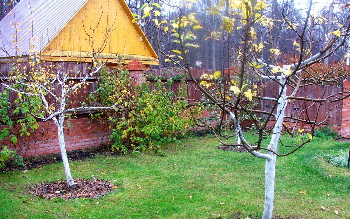 Подготовка сада к зиме: какие работы выполнить осенью