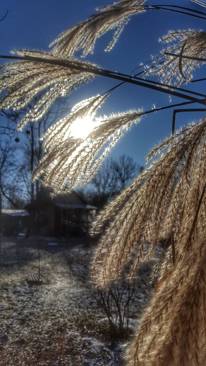 Декабрь.... времена года, природа, юрмала
