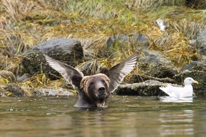 Финалисты конкурса на самую весёлую фотографию дикой природы 2016 года