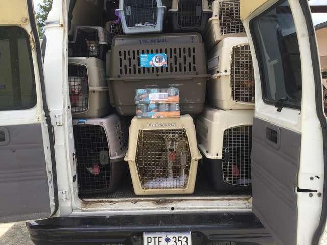 Волонтеры не могли спасти животных от урагана… 55 человек бросили подготовку к шторму, чтобы им помочь!