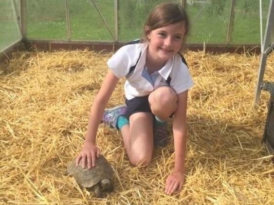 Сбежавшую черепаху нашли по «фотороботу», составленному 9-летней хозяйкой