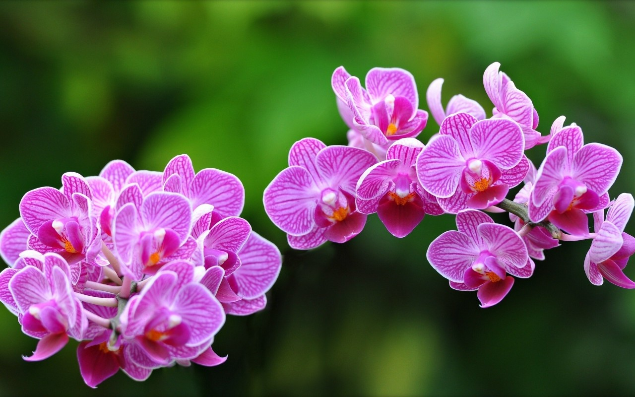 www.GetBg.net_Nature___Flowers_Orchid_Flowers_078003_