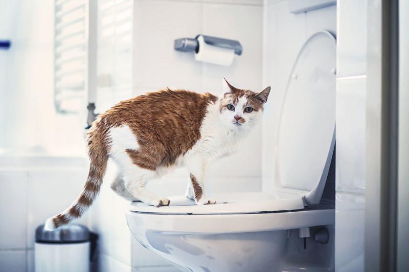 Кошачьи истории в фоторграфиях животные, коты