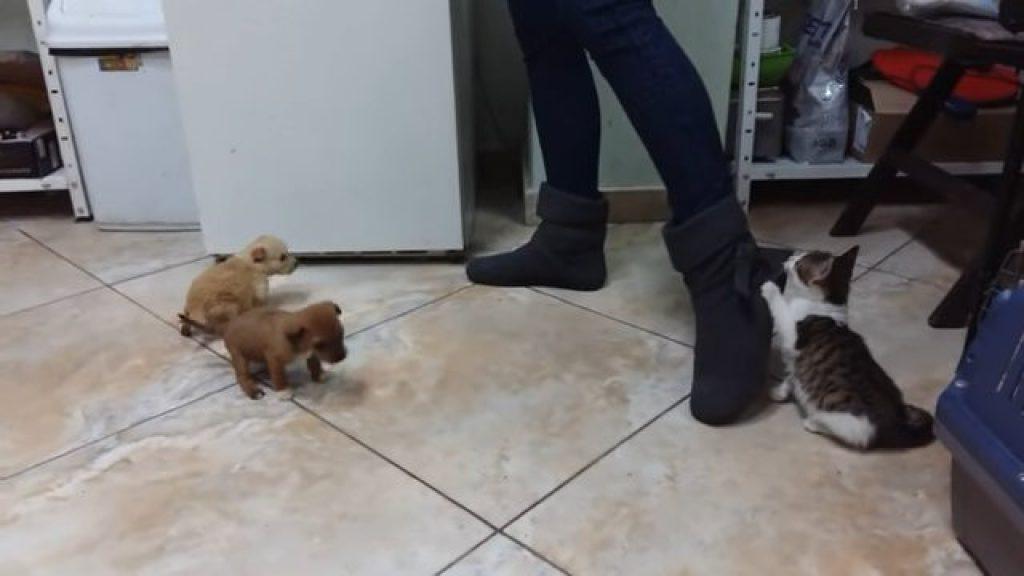 Позитивные будни ветеринара