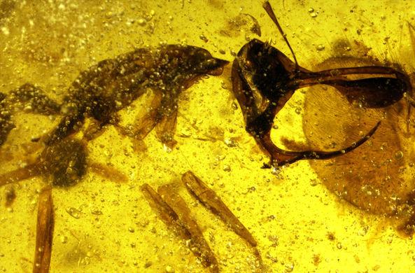 Палеонтологи открыли «адского муравья» с металлическим рогом