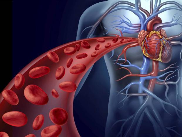 Картинки по запроÑу Как разжижать кровь в организме?