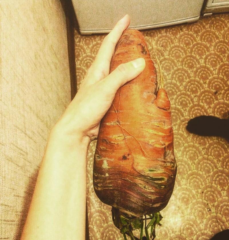 Корнеплоды гигантизм, огромные овощи, огромные фрукты, огромные ягоды, прикол