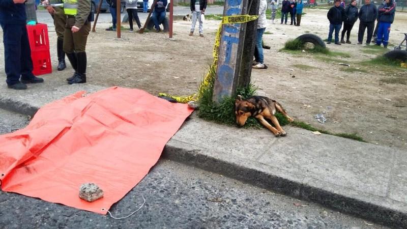 На обочине оживленной улицы неподвижно лежала собака, печально смотря в одну точку...