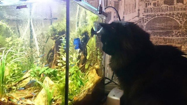 Аквариум – это телевизор для кошек (42 фото + 2 видео + 8 гиф)