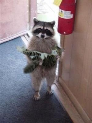 Отдай кота еноту!)