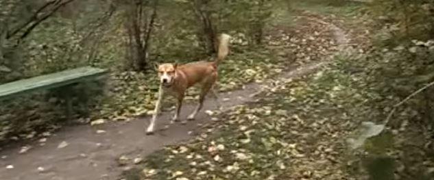 """""""Мне для тебя ничего не жалко!"""" Мужчина подарил бездомному псу свой «Запорожец», чтобы ему было, где жить"""