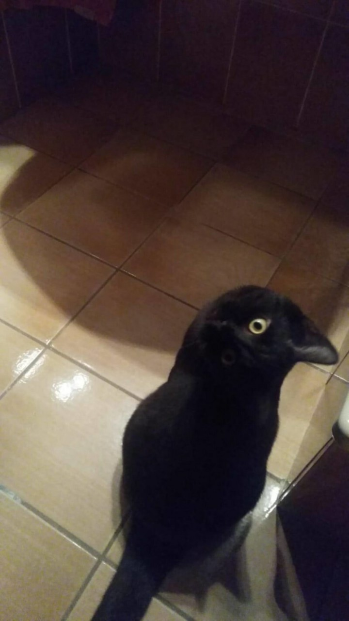 2. Это кошка, а не птица и такое бывает, обман зрения, приколы, смешные фото, смешные фотографии, странные фото, юмор