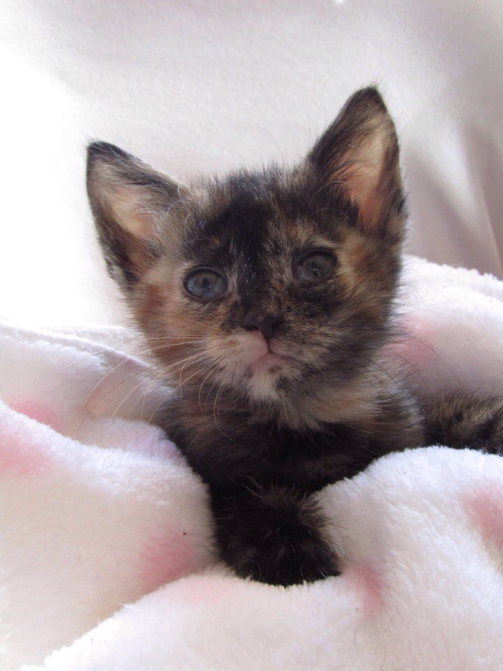 Маленькие ушки торчали из рюкзака. Девочка со сбитыми коленками просила маму спасти котенка