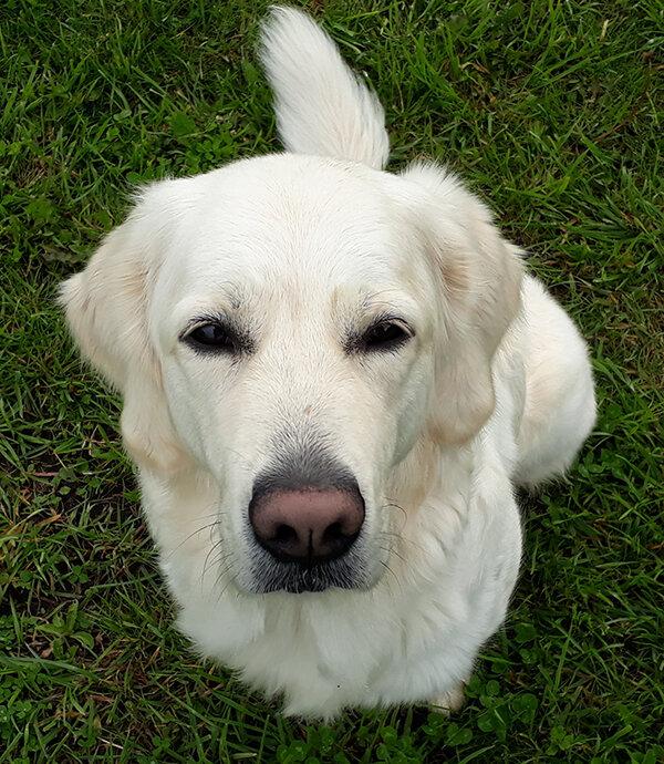 За всю жизнь не испортившая ни одной вещи собака, вдруг, оторвала клочок обоев на глазах покупателей квартиры