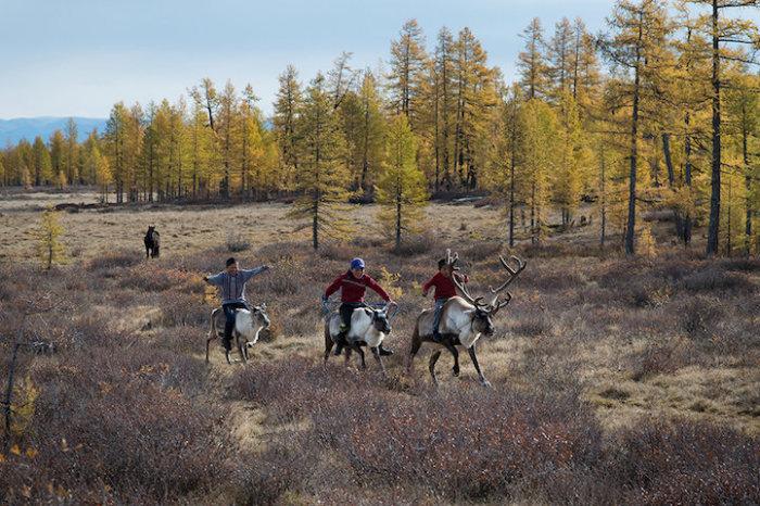 Монгольские дети устраивают между собой гонки на оленях.