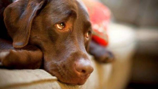 Собаки не плачут