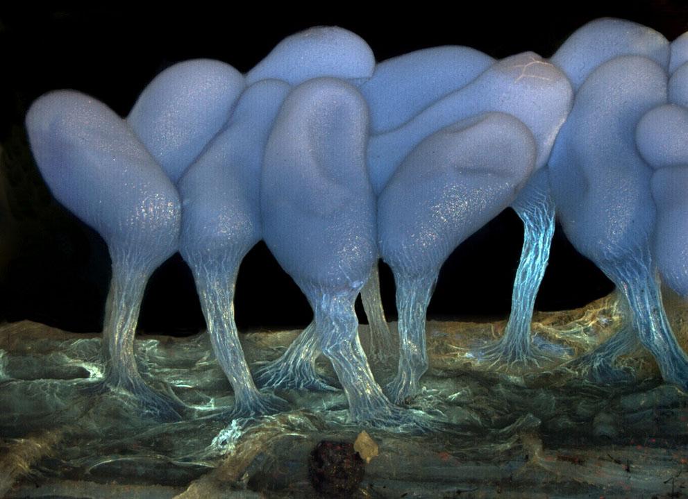 micro07 Под микроскопом
