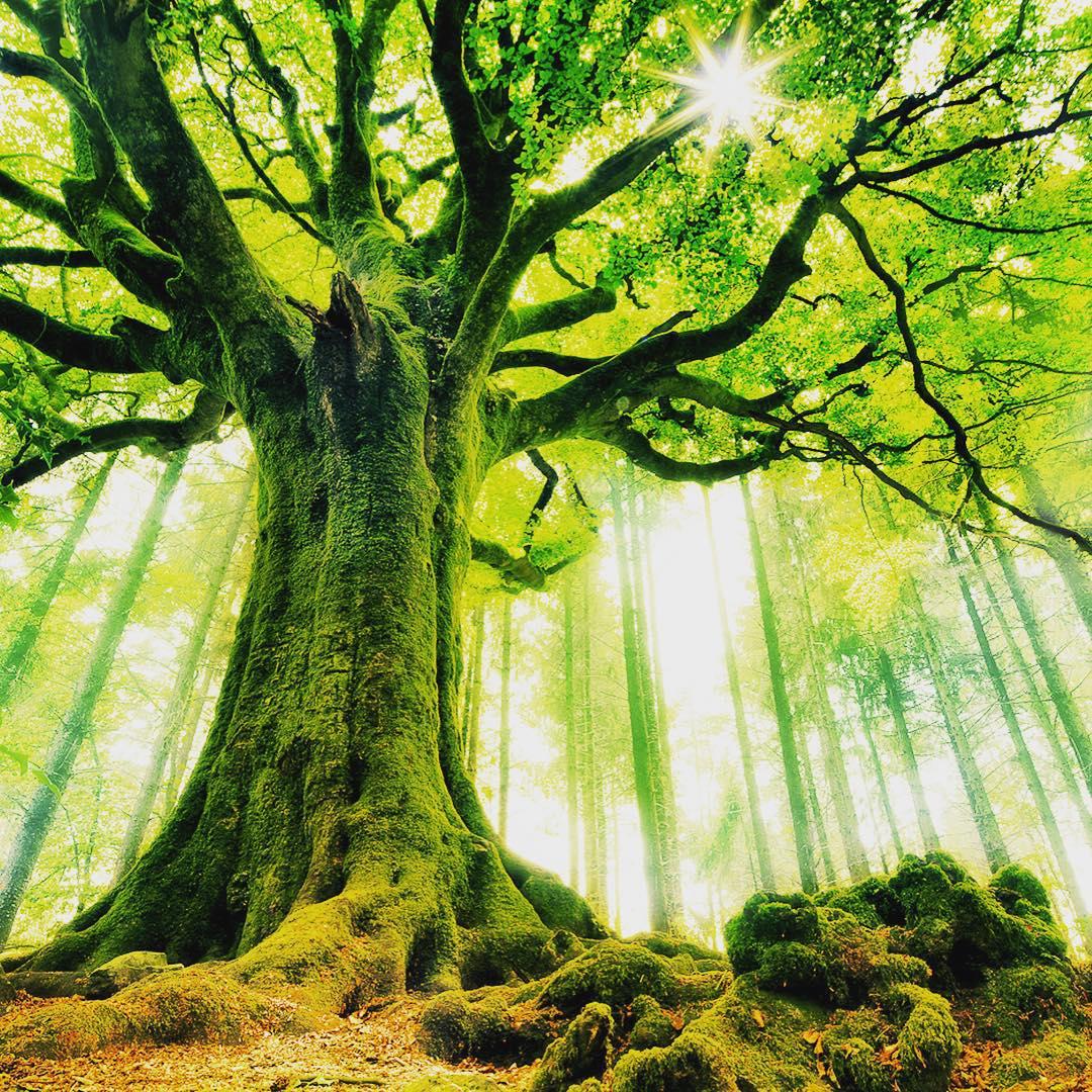 Живые души деревьев. Чудеса равновесия!(удивительные факты)