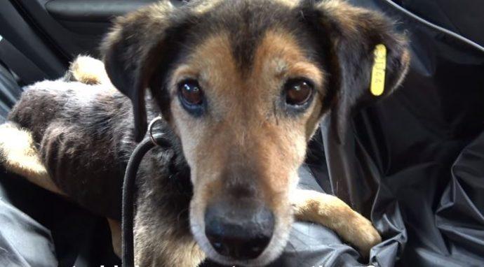 Вместо имени – номер, вместо кровати – клетка… Маленький тощий пёс ждал чуда 8 лет!