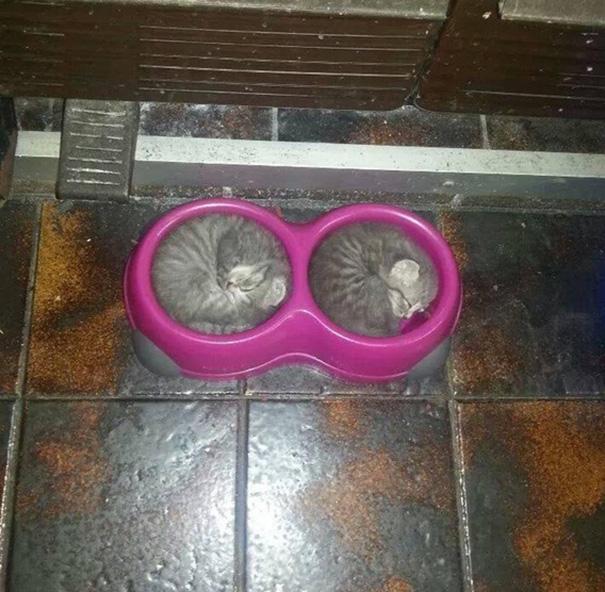 Уморительные снимки спящих котиков. Они спят всегда и везде
