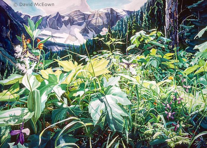 Природа как источник силы и вдохновения — изумительной красоты и чистоты пейзажи David Mceown