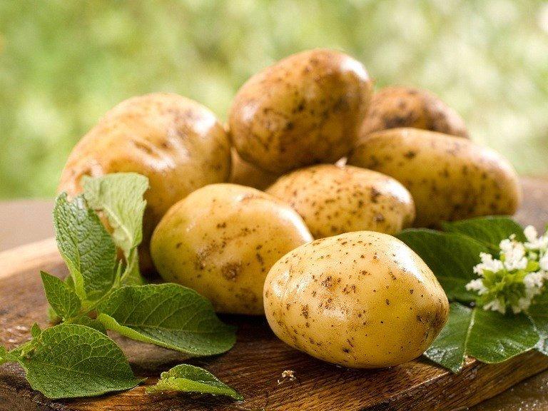 Лечение ростками картофеля.