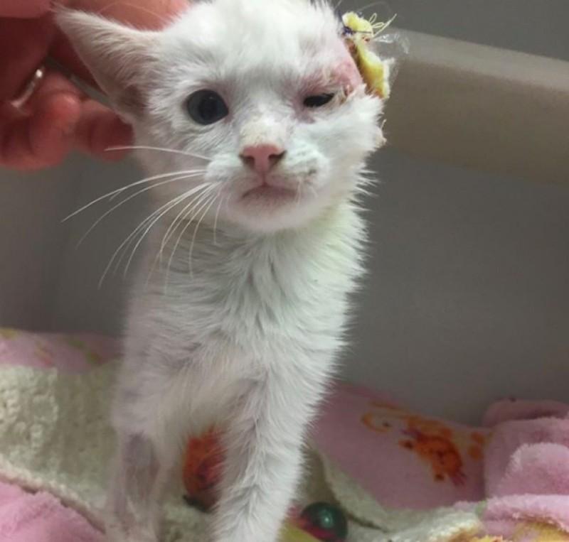 Женщина спасла и выходила одноухого котенка с лейкемией