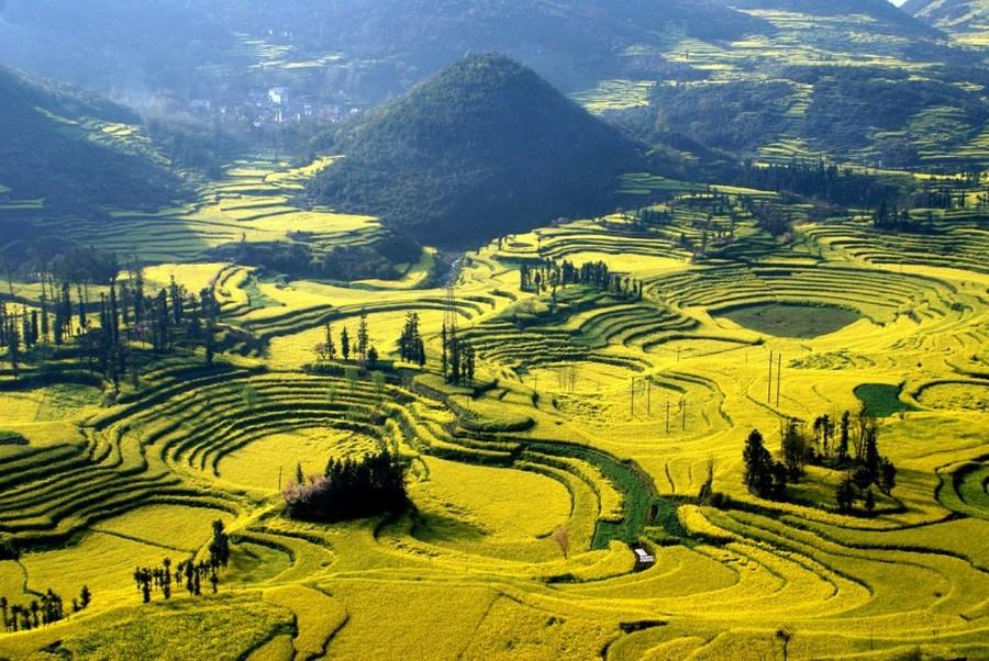 Цветочные Поля Канола: произведения невидимого художника (Китай)