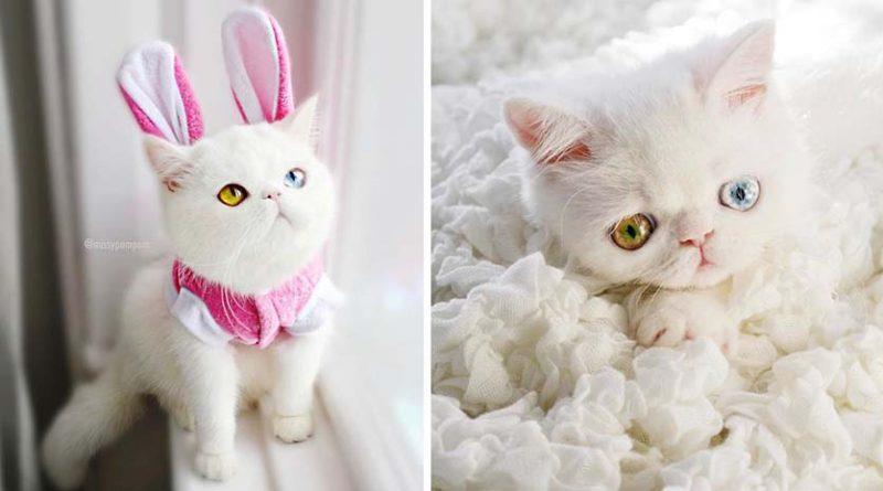 Встречайте Пам Пам, котенка …