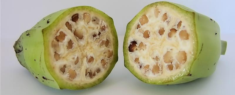 Как дикие овощи и фрукты выглядели до селекции