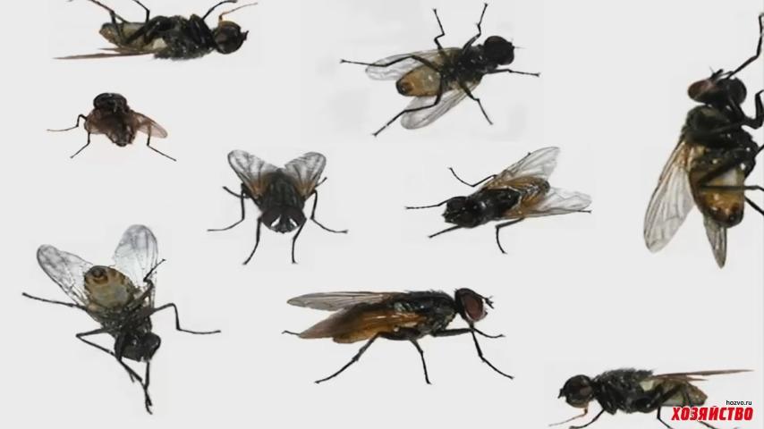 Как отвадить мух от дома