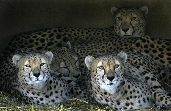 Факты о животных, которые удивят даже самых начитанных людей
