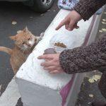 Бездомная кошка скрывала трогательный секрет