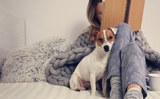 Лучшие собаки для интровертов
