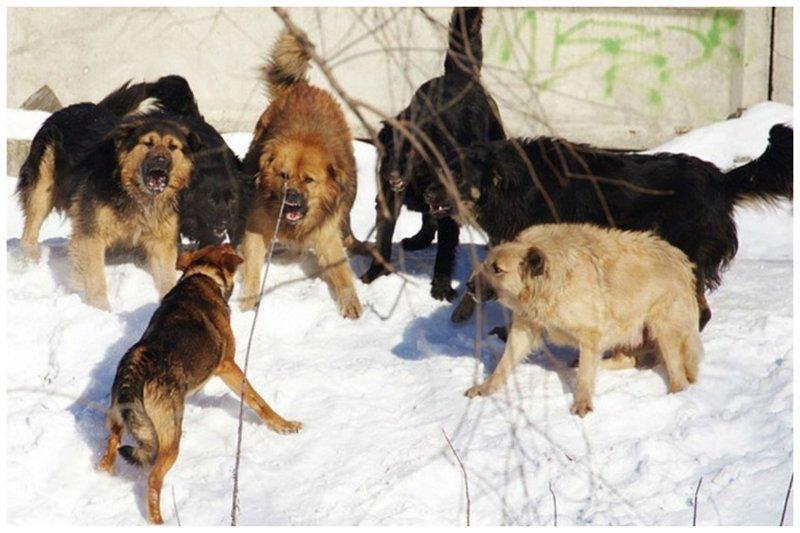 Укушенная семья, или почему я боюсь собак