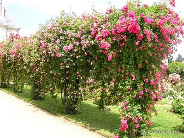 Розарий парка Табор, Франция