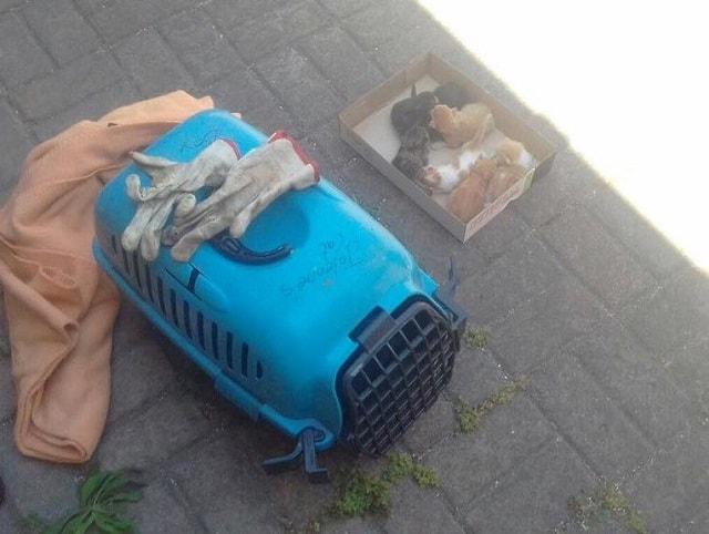 7 новорожденных котят-найдёнышей решили не везти в приют, а оставить на улице в коробке… И правильно сделали