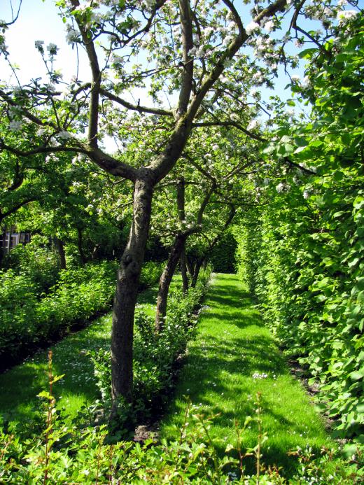 Как старый сад сделать молодым