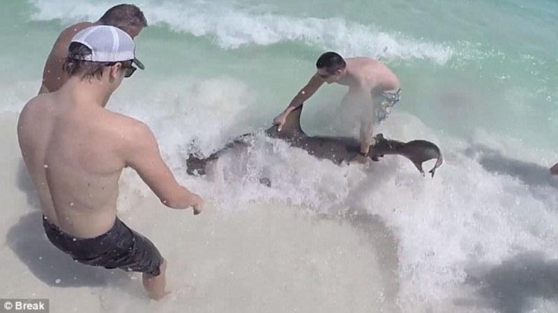 Когда он увидел, что находится у акулы во рту, сразу же кинулся ее спасать!