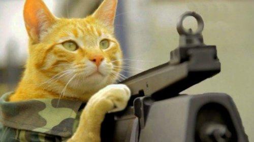 Кошки, готовые к завоеванию …